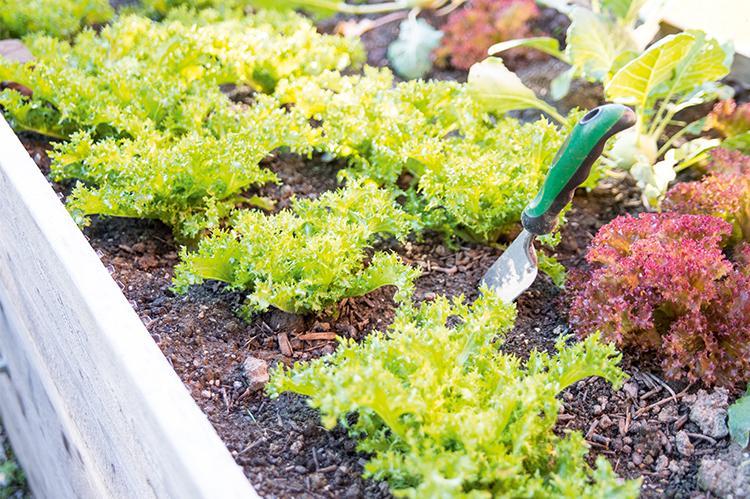 Gemüsebeet der Stiftung arwole